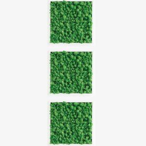 GreenCityLive - Moosbild Islandmoos 3er Set hellgrün