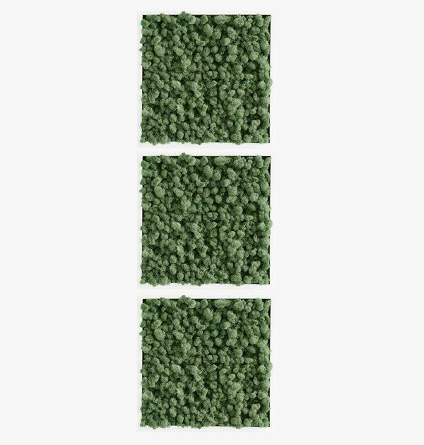 GreenCityLive - Moosbild Islandmoos 3er Set waldgrün