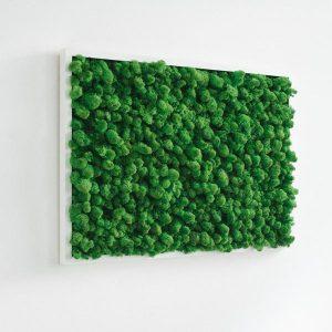 GreenCityLive - Moosbild Islandmoos hellgrün