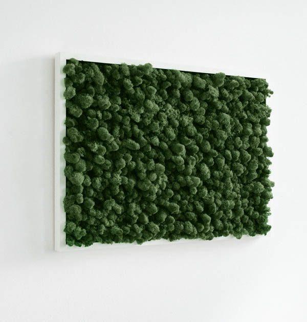 GreenCityLive - Moosbild Islandmoos waldgrün