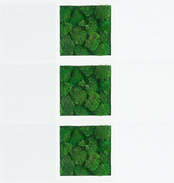 GreenCityLive - Moosbild Polstermoos 3er Set