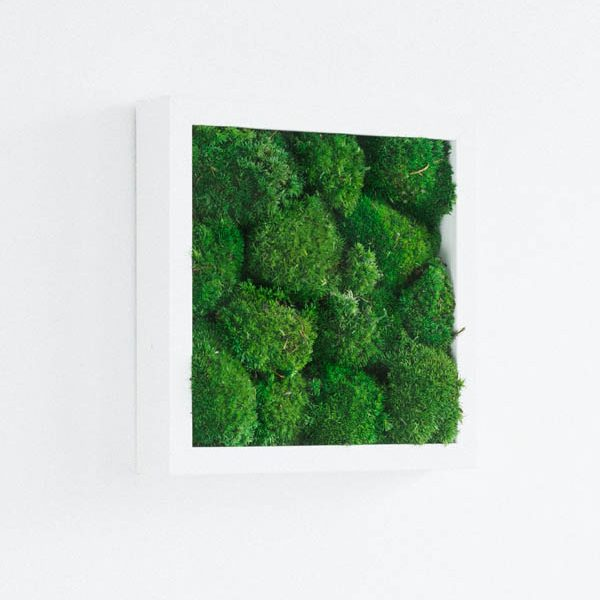 GreenCityLive - Moosbild Polstermoos