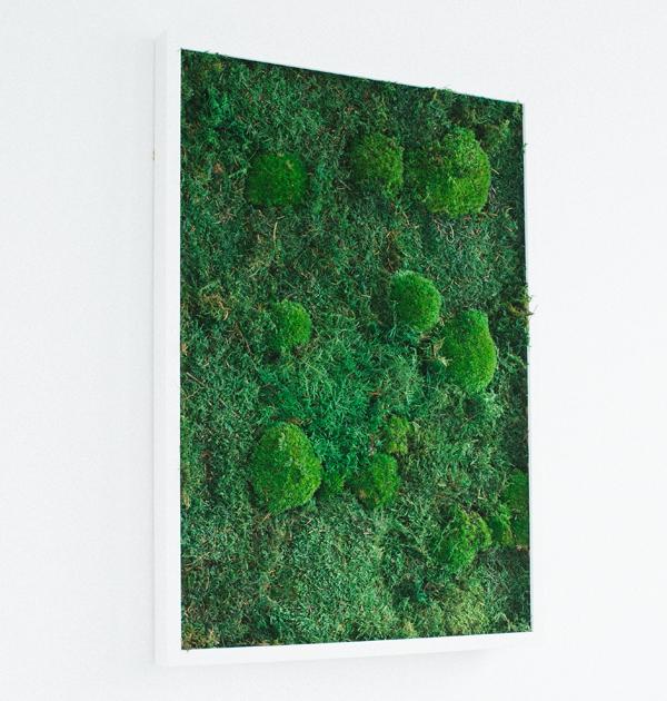 GreenCityLive - Moosbild Waldmoos