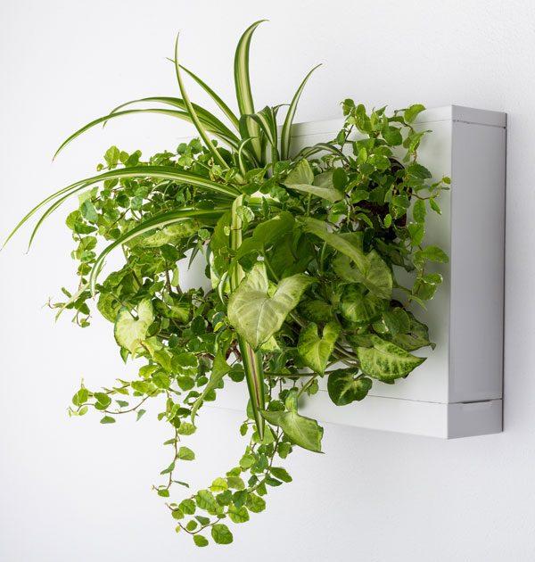 GreenCityLive - Pflanzenbild Rahmen DIY