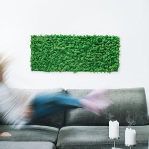 Moosbilder Islandmoos im Online-Shop