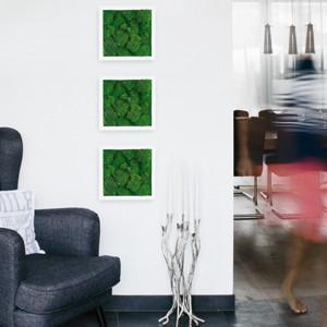 Polstermoosbilder 3er Set im Shop