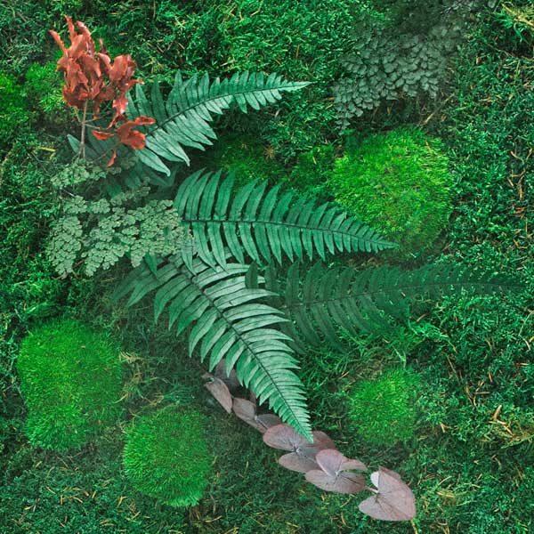 GreenCityLive - Pflanzenbilder Akzent - Maßanfertigung