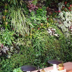 Green City Live Pflanzenwand